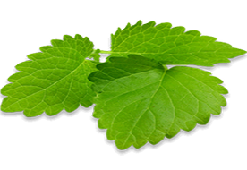 Lemon Balm Herbal
